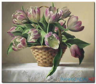 Tulip Khoe Sắc M1321