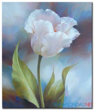 Tulip Khoe Sắc M1334