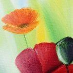 hoa poppy m2212-2