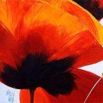 hoa poppy m2216-1