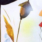 hoa poppy m2216-2