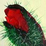 hoa poppy m2219-2