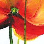hoa poppy m2222-1