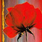 hoa poppy m2224-2
