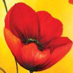 hoa poppy m2225-1
