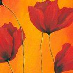 hoa poppy m2230-1