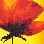 hoa poppy m2232-2