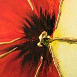 hoa poppy m2238-1