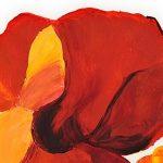hoa poppy m2242-1