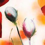 hoa poppy m2242-2