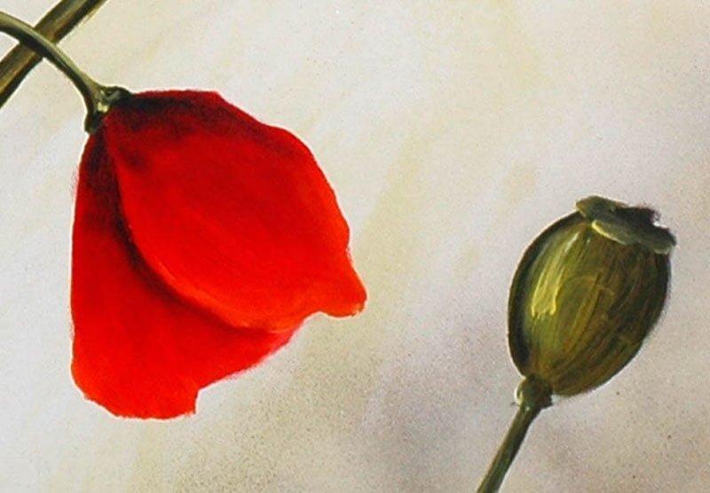 hoa poppy m2243-1