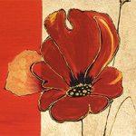 hoa poppy m2244-1