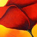 hoa poppy m2246-1