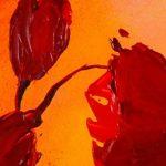 hoa poppy m2248-1