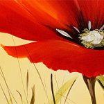 hoa poppy m2261-1