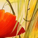 hoa poppy m2261-2