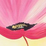 hoa poppy m2262-1