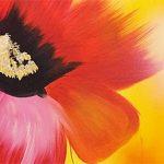 hoa poppy m2262-2