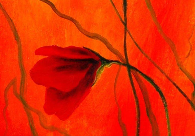 hoa poppy m2264-1