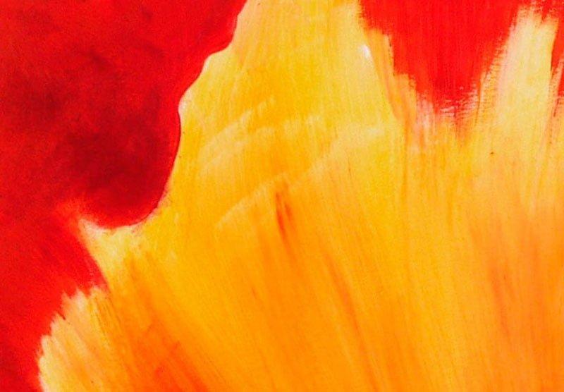 hoa poppy m2271-2