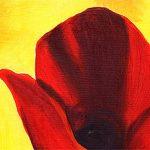 hoa poppy m2272-2