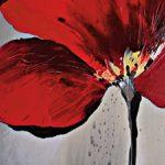 hoa poppy m2274-1