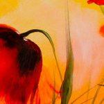 hoa poppy m2275-1