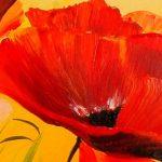 hoa poppy m2275-2