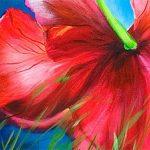 hoa poppy m2276-2