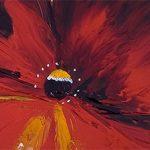 hoa poppy m2277-2