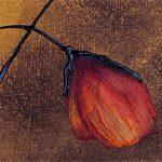 hoa poppy m2281-1