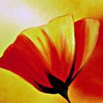 hoa poppy m2284-1