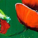 hoa poppy m2287-1