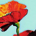 hoa poppy m2309-2
