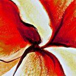 hoa poppy m2317-2