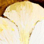 hoa poppy m2318-2