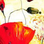 hoa poppy m2324-1