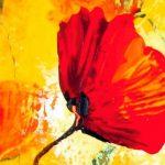 hoa poppy m2324-2