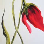 hoa poppy m2332-1