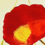 hoa poppy m2335-1