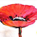 hoa poppy m2340-1