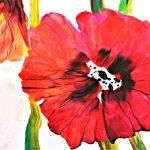 hoa poppy m2340-2