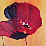 hoa poppy m2341-2