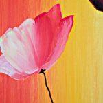 hoa poppy m2345-2