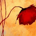 hoa poppy m2348-1