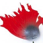 hoa poppy m2349-1