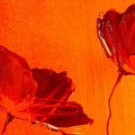 hoa poppy m2350-2