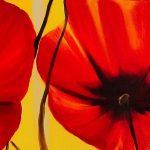 hoa poppy m2352-2