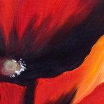 hoa poppy m2353-1