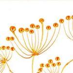 hoa poppy m2356-2